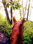 The Best Horseback Riding Trails In Iowa