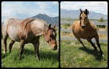 Mares For Sale In Idaho