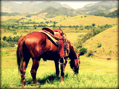 Sorrel Horse Grazing in the Mountains