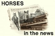 Horse Stories In The News