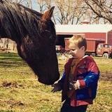 Allergies In Horses
