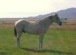 My Horse Rudy