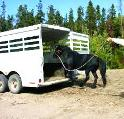 How To Train A Horse To Load In A Trailer
