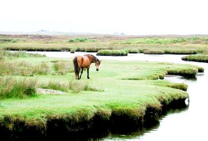 Riverside Horse