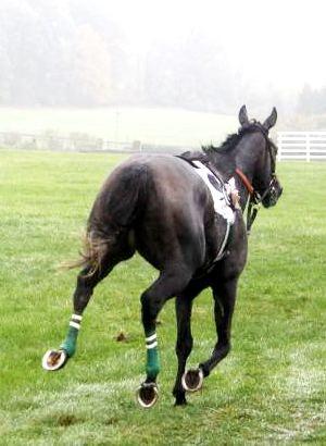Black Horse Runaway