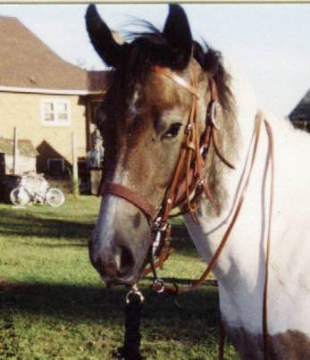 Beauty — Horse Stories — Horse Training — Horse Blog
