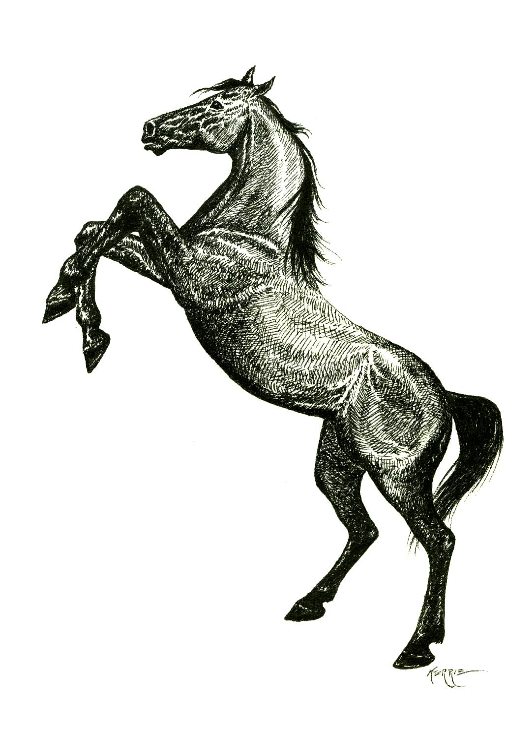 Drawing Horses From The Rear