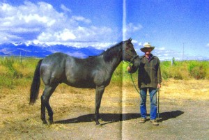 Blue Roan Stallion and my Dad