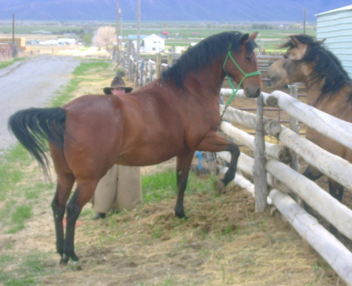 Tagged as horse bloodlines horse stories new foal quarter horse