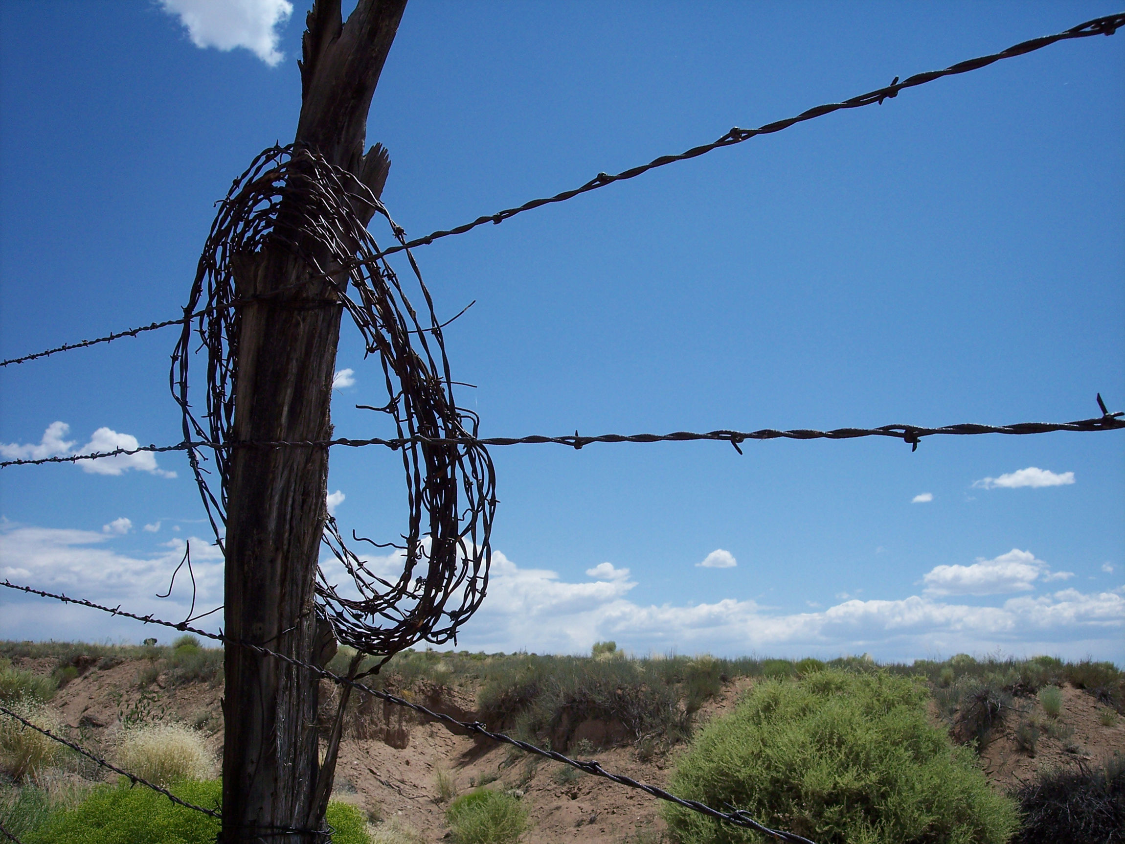 Barbed Wire Fence Cattle
