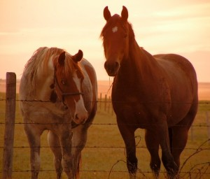 Horse Slaughter Issue