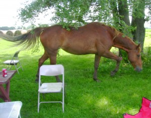 My Horse Daisy Joining Our Summer Picnic