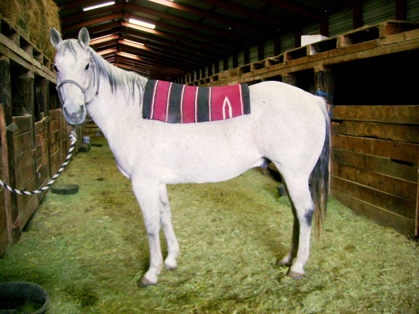 Step By Step Directions for Saddling A Horse