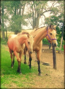 Buckskin Mare and Foal
