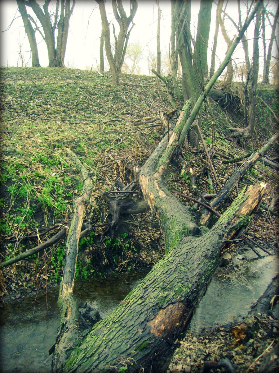Fallen Tree Bridge Across the Creek