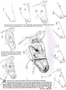 Horses drawings in pencil step by step - photo#39