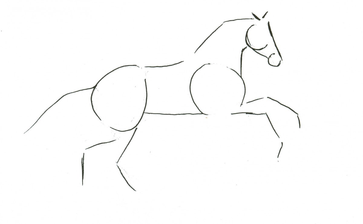 Sketching A Horse How To Draw Horses