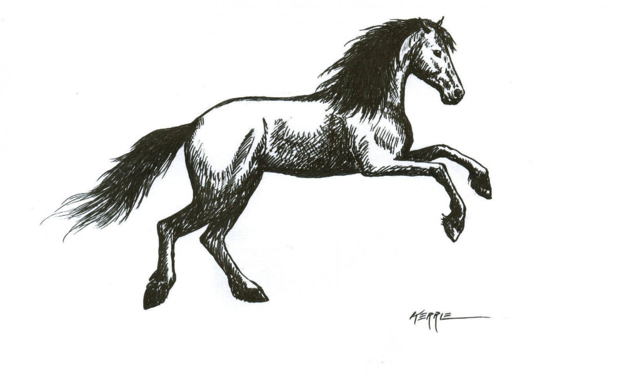 how to draw a horse horse drawing