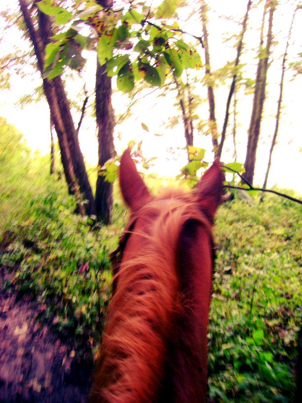 descriptive horseback riding Creative writing term papers (paper 2818) on holiday on mackinaw island: holiday on mackinaw island audience: vacation takers, recommended for over.