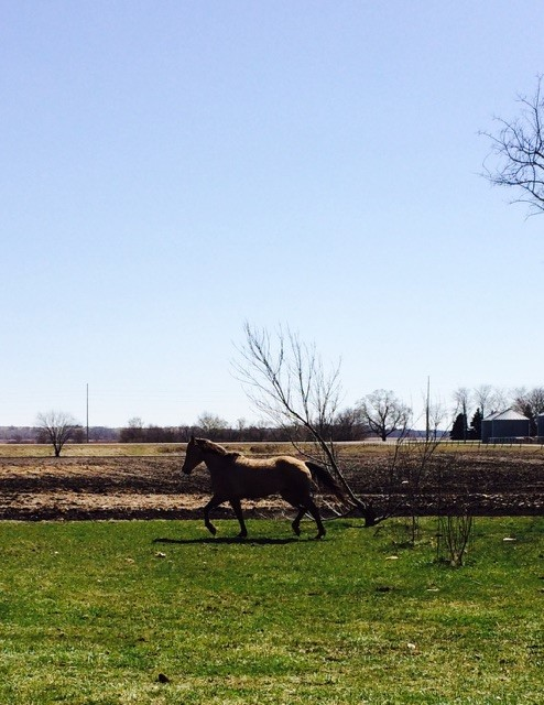 Penny Running at the Farm, March 27