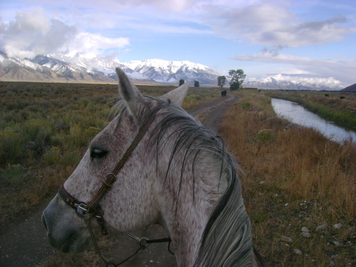 Riding Rudy in Idaho