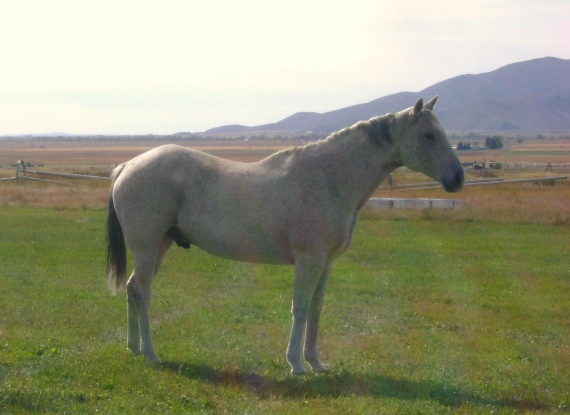 Rudy, Idaho 2009