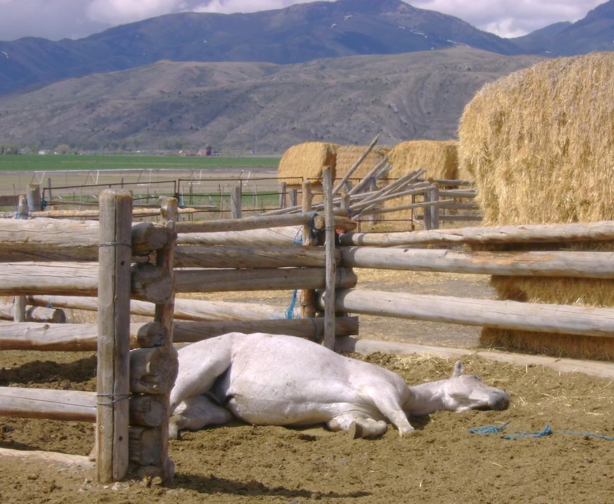 Rudy Sleeping