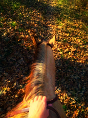 Riding Penny Through Fall Leaves